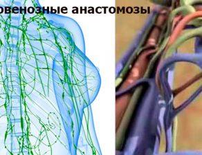 Лимфовенозные и лимфовенулярные анастомозы